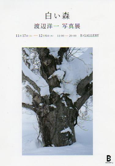 2012-11-051.jpg